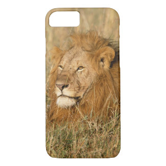 Adult male Lion at first light iPhone 7 Case