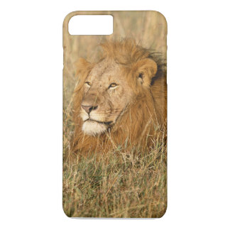 Adult male Lion at first light iPhone 7 Plus Case