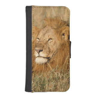 Adult male Lion at first light iPhone SE/5/5s Wallet Case