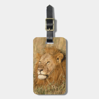 Adult male Lion at first light Luggage Tag