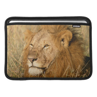 Adult male Lion at first light MacBook Sleeve