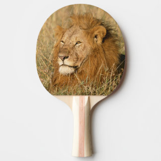 Adult male Lion at first light Ping Pong Paddle
