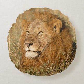 Adult male Lion at first light Round Cushion