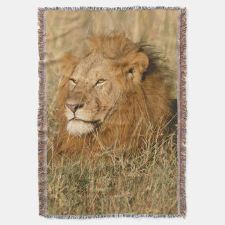 Adult male Lion at first light Throw Blanket