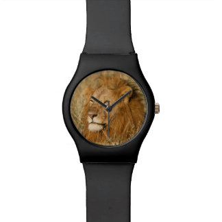Adult male Lion at first light Wristwatches