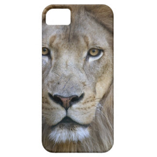 Adult male lion at the Sacramento Zoo, CA iPhone 5 Cases