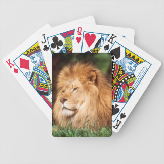 Adult male Lion Bicycle Playing Cards
