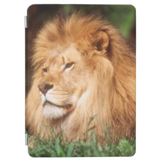 Adult male Lion iPad Air Cover