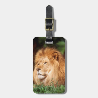 Adult male Lion Luggage Tag