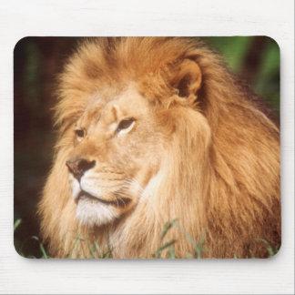 Adult male Lion Mouse Mat