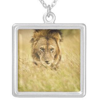 Adult male lion, Panthera leo, Masai Mara, Kenya Silver Plated Necklace