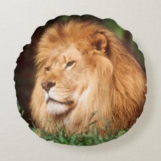 Adult male Lion Round Cushion