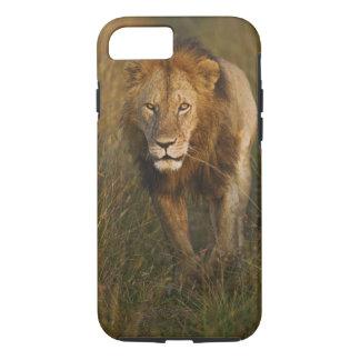 Adult male lion walking through tire tracks, iPhone 8/7 case