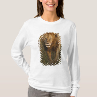 Adult male lion walking through tire tracks, T-Shirt