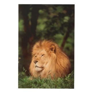 Adult male Lion Wood Print