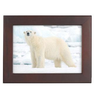 Adult polar bear in search of food keepsake box
