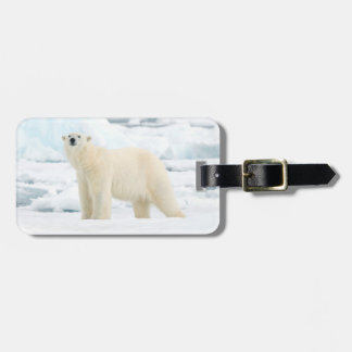 Adult polar bear in search of food luggage tag