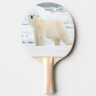 Adult polar bear in search of food ping pong paddle