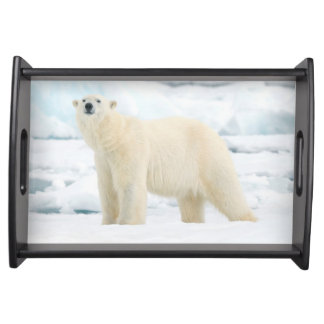 Adult polar bear in search of food serving tray