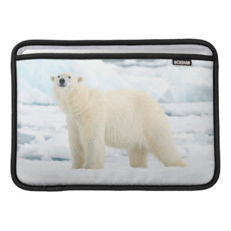 Adult polar bear in search of food sleeve for MacBook air