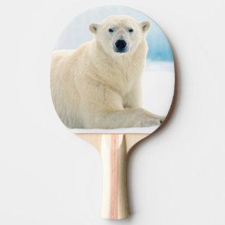Adult polar bear large boar on the summer ice