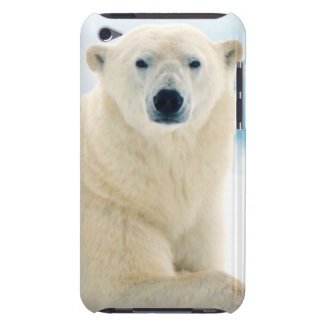 Adult polar bear large boar on the summer ice barely there iPod case