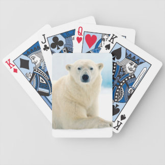 Adult polar bear large boar on the summer ice bicycle playing cards