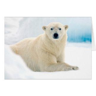 Adult polar bear large boar on the summer ice card