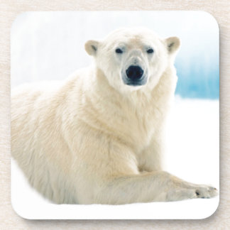 Adult polar bear large boar on the summer ice drink coasters