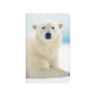 Adult polar bear large boar on the summer ice journal