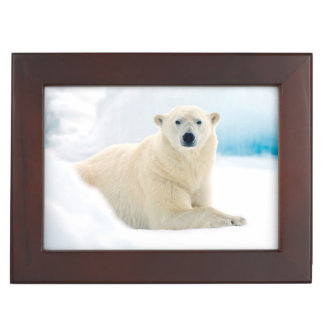 Adult polar bear large boar on the summer ice keepsake boxes