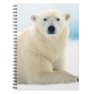 Adult polar bear large boar on the summer ice notebook