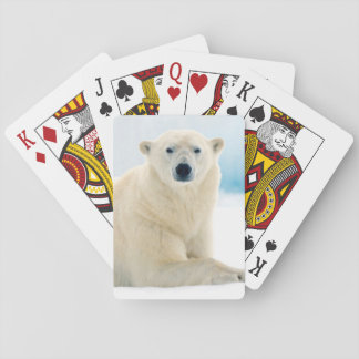 Adult polar bear large boar on the summer ice playing cards