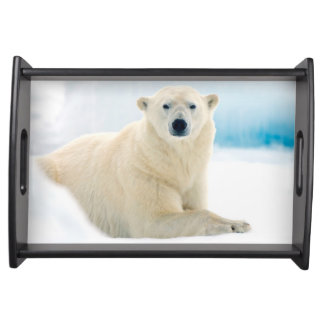 Adult polar bear large boar on the summer ice serving tray