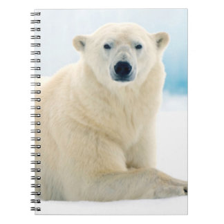 Adult polar bear large boar on the summer ice spiral notebook
