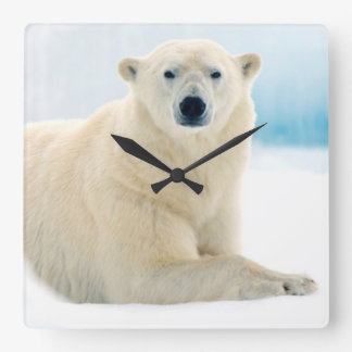 Adult polar bear large boar on the summer ice square wall clock