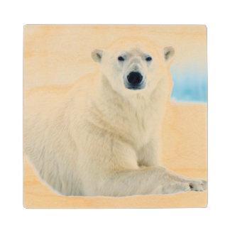 Adult polar bear large boar on the summer ice wood coaster