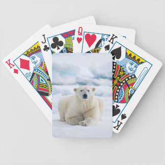 Adult polar bear on the summer pack ice bicycle playing cards