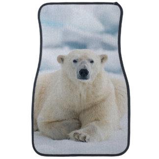 Adult polar bear on the summer pack ice floor mat