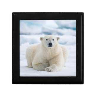 Adult polar bear on the summer pack ice gift box