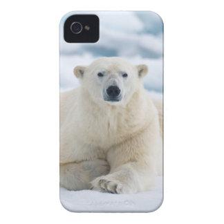 Adult polar bear on the summer pack ice iPhone 4 case
