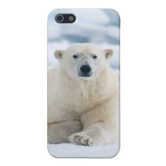 Adult polar bear on the summer pack ice iPhone 5/5S cover