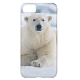 Adult polar bear on the summer pack ice iPhone 5C case