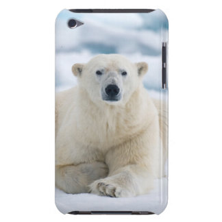 Adult polar bear on the summer pack ice iPod Case-Mate case