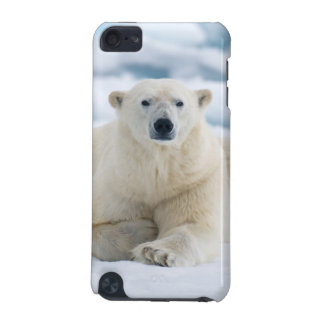 Adult polar bear on the summer pack ice iPod touch 5G cases