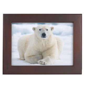 Adult polar bear on the summer pack ice keepsake box