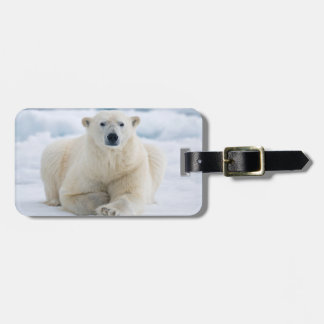 Adult polar bear on the summer pack ice luggage tag
