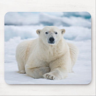 Adult polar bear on the summer pack ice mouse mat