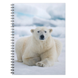 Adult polar bear on the summer pack ice notebook