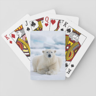 Adult polar bear on the summer pack ice playing cards